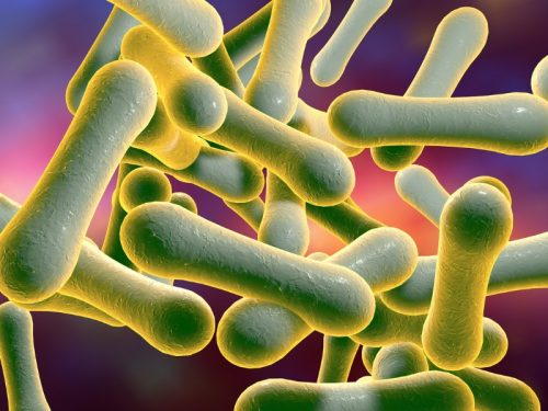 Bacilo Difterico bacteria which cause diphtheria picture id628940742